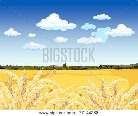 Landscape Yellow Field With Wheat.eps