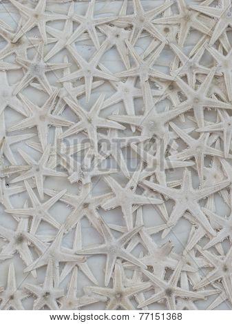 Dried White Starfish