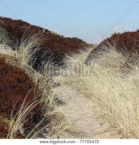 Dune Landscape In South Of The Island Of Sylt