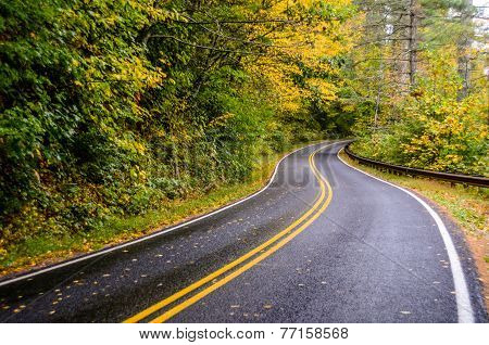 Winding Road In Fall