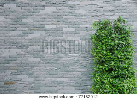 Brick wall and tree