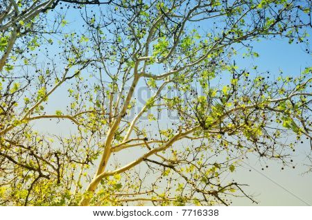Tree branches