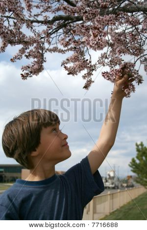 Stock Image Of Happy Boy And Cherry Tree