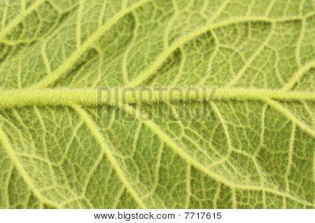 Close-up of large leaf