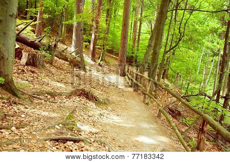 Vintage Autumn Forest Mountain Path