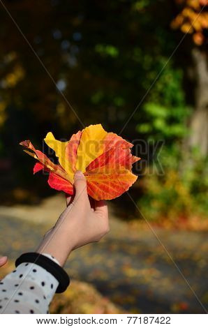 Autumn Leaves In Hand