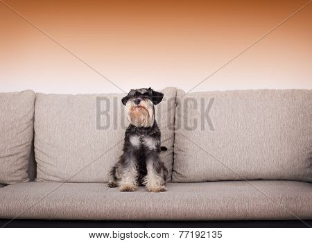 Dog On Sofa