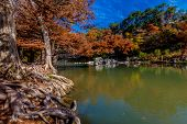 foto of guadalupe  - Intricate Intertwined Gnarly Cypress Tree Roots with Beautiful Fall Foliage on the Banks of the Guadalupe River at Guadalupe State Park - JPG