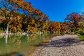 stock photo of guadalupe  - Intricate Intertwined Cypress Tree Roots with Beautiful Fall Foliage on the Banks of the Guadalupe River at Guadalupe State Park - JPG