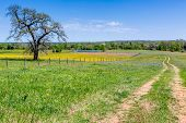 pic of texas star  - Old Texas Country Dirt Road Next to a Field of Wildflowers with Wire Fence and Old Oak Tree - JPG