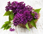 pic of lilac bush  - summer lilac flowers in basket on a wooden background - JPG