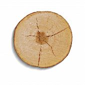 stock photo of cutting trees  - top view of a tree stump vector tree cut - JPG