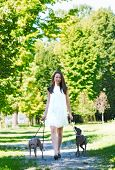 picture of greyhounds  - Young attractive girl dressed elegantly walking with two greyhounds in the park  - JPG