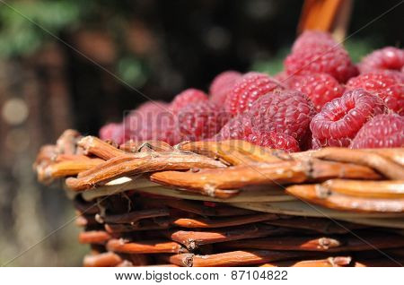 Red Ripe Raspberry