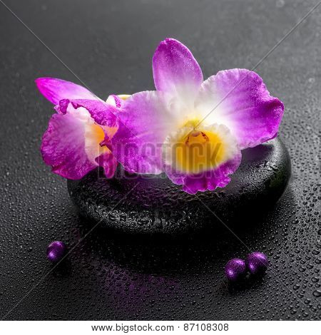 Spa Concept Of Purple Orchid Dendrobium With Dew And Pearl Beads On Black Zen Stone, Closeup