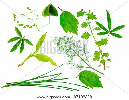Beautiful Different Exotic Green Leaves Is Isolated On White Background, Closeup