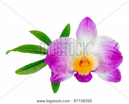Dendrobium Flower And Leaf Passionflower Is Isolated On White Background