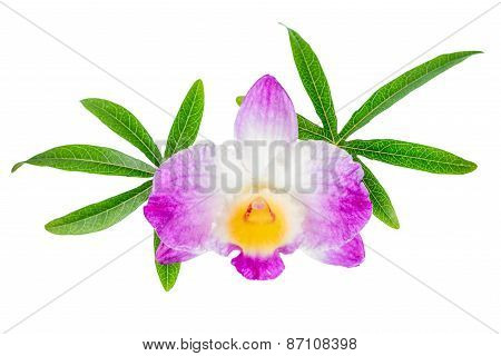 Composition Of Dendrobium Flower And Leaves Passionflower Is Isolated On White Background, Closeup