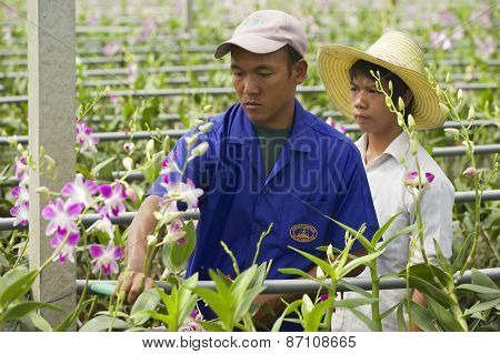 People work at the orchid farm in Samut Songkram, Thailand.