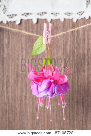 Fuchsia Flowers Handing On Rope With Clothespin On Wooden And Embroidered Napkin Background, Closeup