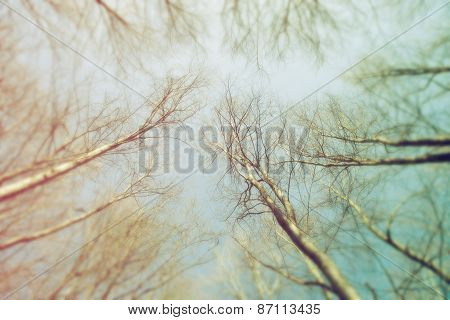 Blurred Forest As Abstract Background Of Nature