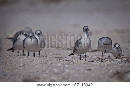 Terns On The Beach