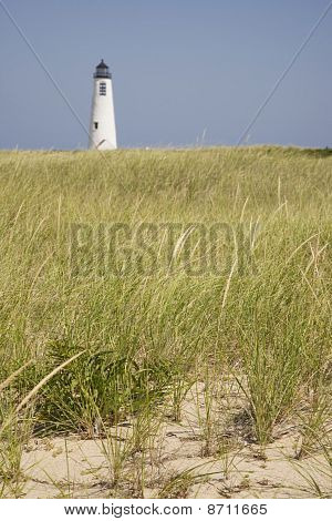 Seagrass And Great Point Light Nantucket