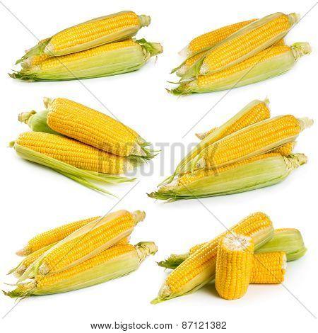 Set Of Fresh Sweet Corn