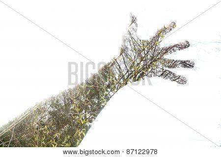 Double exposure of hands and woodland scenes