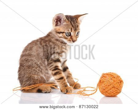 playful  kitten with brown ball