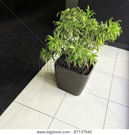 Green Plant On Black And White Floor