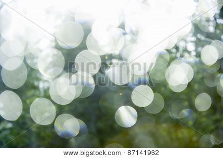 Glare On A Background Of Green Summer Foliage