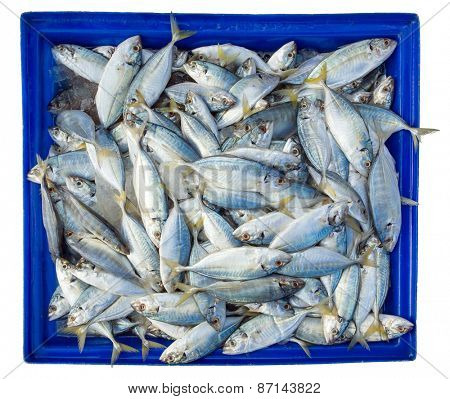 Fish in blue box isolated on white background