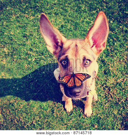 a cute dog in the grass at a park during summer with a butterfly on his or her nose toned with a retro vintage instagram filter effect app or action