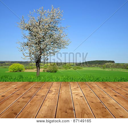 Blooming tree in spring landscape.