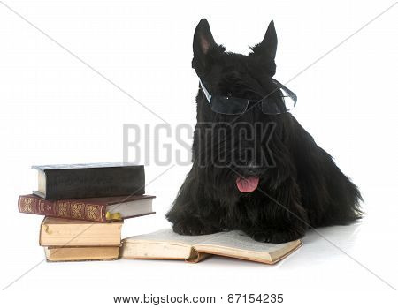 Scottish Terrier And Book