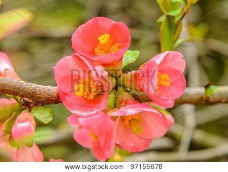 Perfect blossom, sakura flowers.