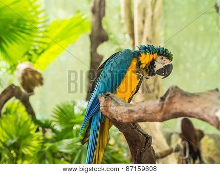 Tropical Colour Parrot Sitting On Branch