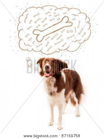 Cute brown and white border collie dreaming about a bone in a thought bubble
