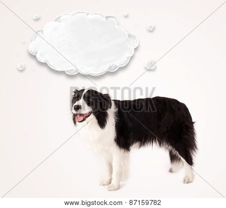 Cute black and white border collie with empty cloud above her head