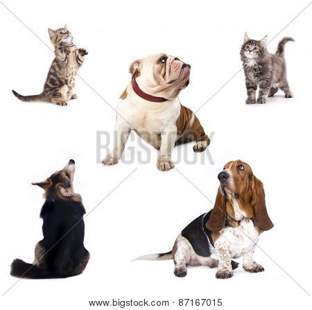 group of dog  kitten  and standing on hind legs, kitten looking up