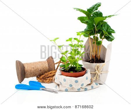 Young Plants In The Package Offered For Sale, Isolated On White Background
