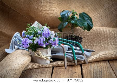 Campanula Terry Flowers With Gardening Tools, On Sackcloth, On Wooden Background