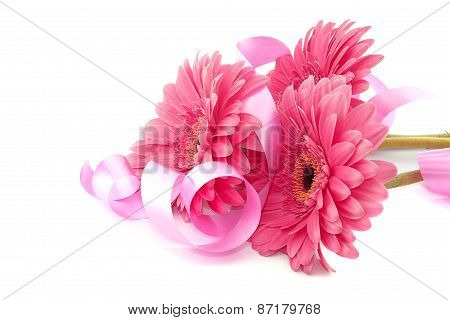 Pink Flowers Gerbera With Ribbon Isolated On White Background.