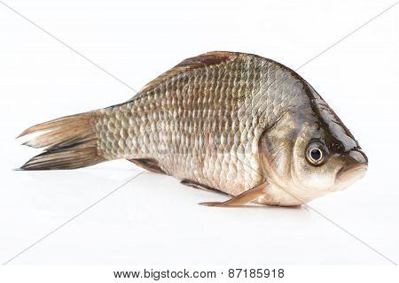 Fish Crucian