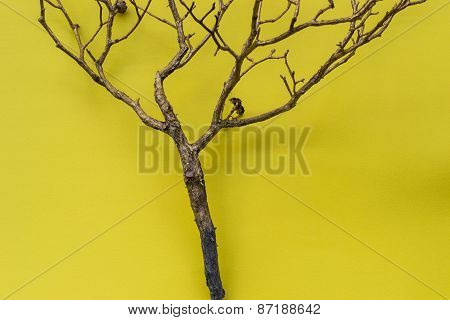 Tree Or Branch On Yellow Background