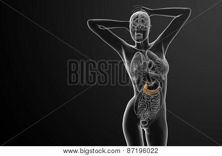 3D Render Medical Illustration Of The Gallblader And Pancrease