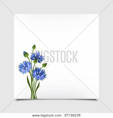 Vector card with blue cornflowers. Eps-10.