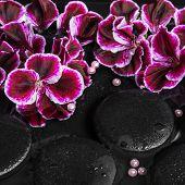 pic of geranium  - beautiful spa still life of geranium flower beads and black zen stones with drops in reflection water Pelargonium closeup - JPG