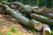 stock photo of alder-tree  - A firewood at forest road in the mixed forest  - JPG